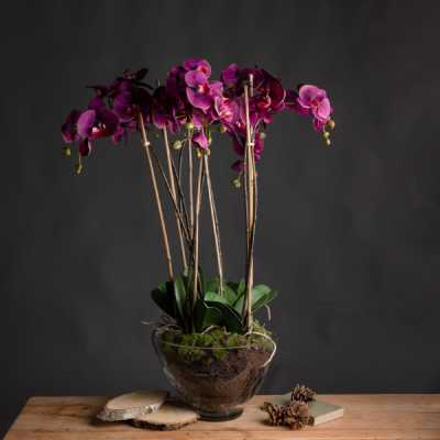 Large Deep Red Orchid with Succulents In a Modern Round Glass Pot