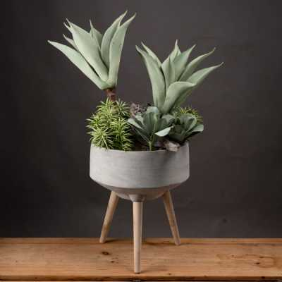Succulent And Aloe Garden Green in a Modern Stone Made Round Pot