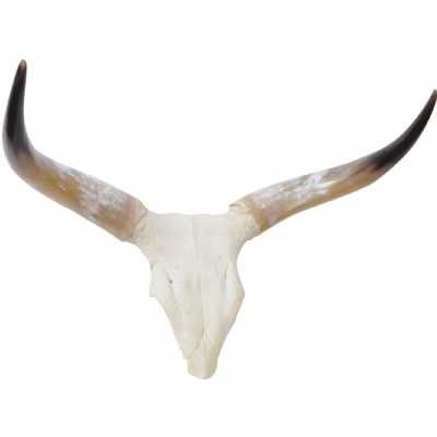 Homestead Small Genuine Cow Skull with Polished Horns Wall Decor Small