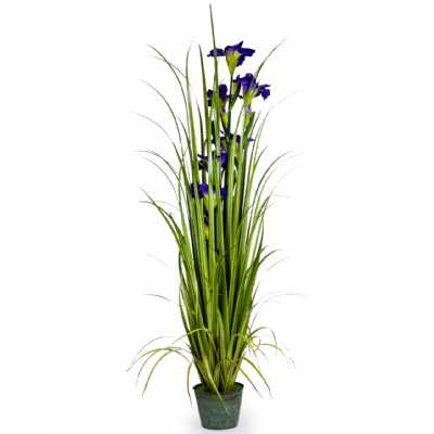 Ornamental Grasses In Galvanised Pot Style 7 with Blue Iris
