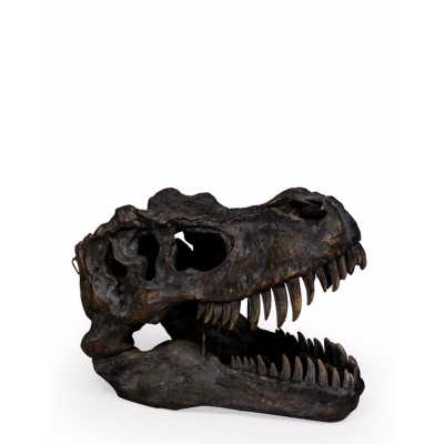 Extra Large Polyresin T Rex Dinosaur Skull Head Wall Hanging Decor
