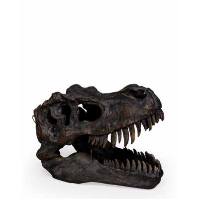 Extra Large T Rex Skull Wall Head