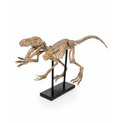 Extra Large T rex Raptor Resin Dinosaur Skeleton Sculpture On Stand