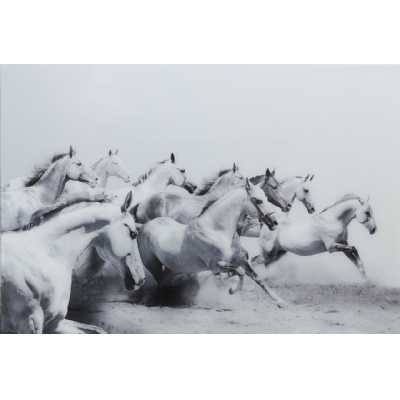 Free Spirit White And Grey Horses Tempered Glass Art Print