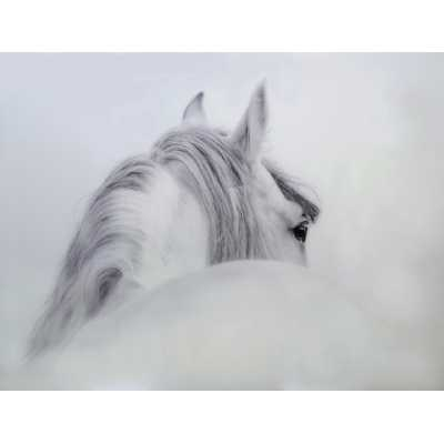 Modern White And Grey Horse Tempered Glass Art Print