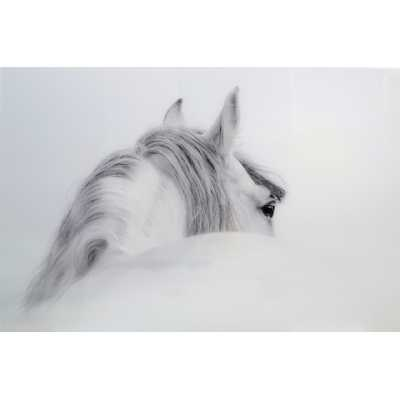 Majestic White And Grey Horse Tempered Glass Art Print